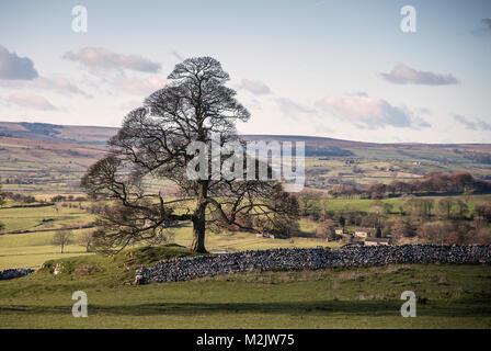 Old tree overlooking the Derbyshire countryside near Hartington. England.UK - Stock Photo