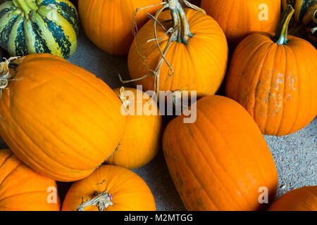 Autumn Pumpkin Thanksgiving and Halloween Background - orange pumpkins over wooden table. - Stock Photo