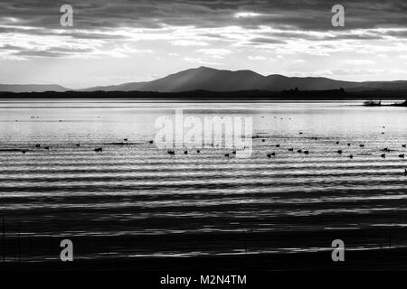 Beautiful and sharp water ripples on Trasimeno lake (Umbria, Italy) at sunset, with ducks and distant hills - Stock Photo