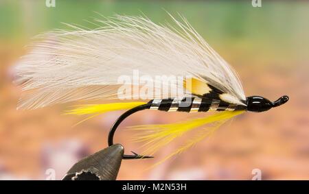 Black Ghost streamer fishing fly - Stock Photo