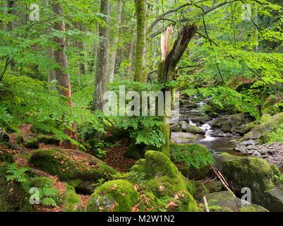 Steinklamm, Spiegelau, the Bavarian Forest, Bavaria, Germany - Stock Photo