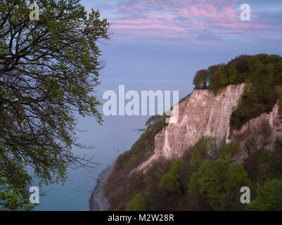 Chalk cliff in the evening, Jasmund National Park, Rügen, Mecklenburg-Western Pomerania, Germany - Stock Photo