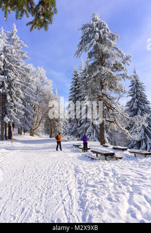 Two women cross country skiers are resting on the route. Tall lonely pine tree growing on a hill by the road. Hoary - Stock Photo