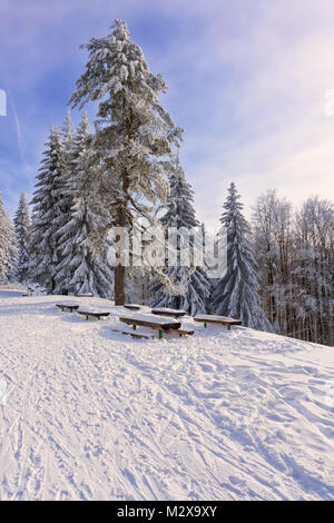 Winter mountain landscape. Tall lonely pine tree growing on a hill by the road. Hoary trees, blue sky and sunlight. - Stock Photo