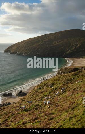 Flock of sheep grazing above Keem Bay, Achill Island, County Mayo, Ireland. - Stock Photo