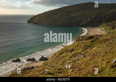 Flock of sheep grazing above Keem Bay, Achill Island, County Mayo, Ireland. - Stock Photo