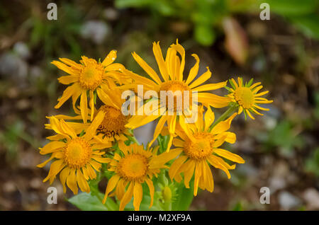 Wildflowers mark summer in the mountains - Stock Photo