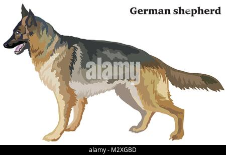 Portrait of standing in profile dog german shepherd, vector colorful illustration isolated on white background - Stock Photo