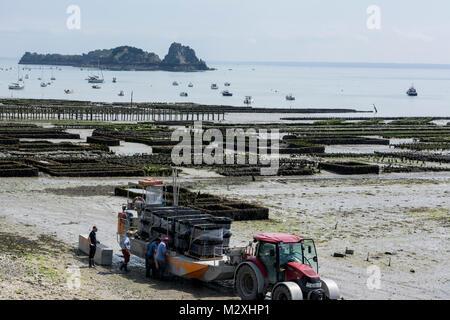 Cancale in der Bucht von Mont St.Michel mit seiner berühmten Austernzucht - Stock Photo