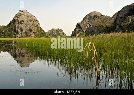 Reeds in the Van Long Nature Reserve, Ninh Binh Province, north Vietnam - Stock Photo