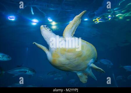 England, Devon, Plymouth, The National Marine Aquarium - Stock Photo
