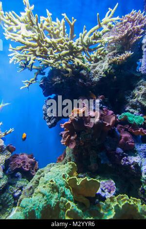England, Devon, Plymouth, The National Marine Aquarium, Coral Reef - Stock Photo