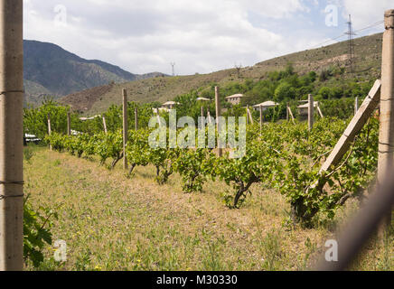 Wine production is a tradition in Areni in southern Armenia, small scale vineyard and village dwellings - Stock Photo