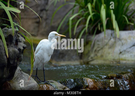 Egret walking along the edge of a small waterfall - Stock Photo
