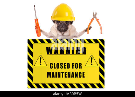 pug dog with constructor safety helmet holding pliers and screwdriver with yellow warning sign saying closed for - Stock Photo