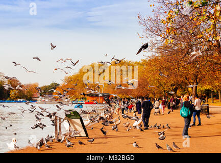 London, UK - October 31, 2014: People feeding pigeons in Hyde Park, London. - Stock Photo