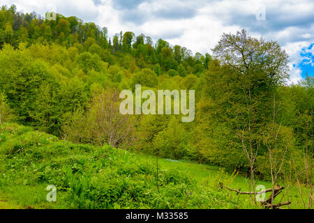 Serene lush green forest landscape with blue skies and puffy clouds. Snow capped mountain range with blue sky and - Stock Photo