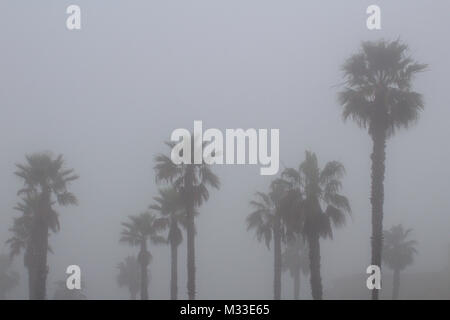 palm trees surrounded by thick coastal fog - Stock Photo