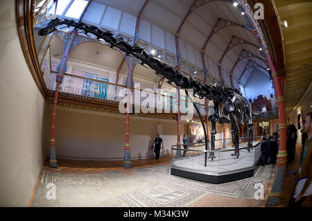 Dorset County Museum, UK. 9th February, 2018. Dippy the Diplodocus goes on display at Dorset County Museum on the - Stock Photo