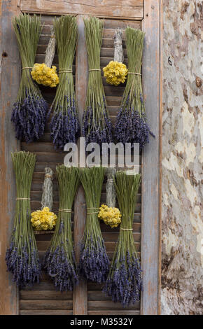 Dried lavender and dried straw flowers hanging upside down on a wooden shutter. A plane tree is on the right. - Stock Photo