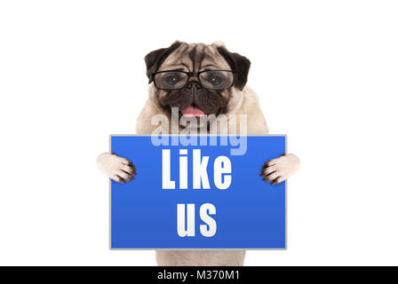 pug dog with glasses holding up blue sign with text like us, isolated on white background - Stock Photo