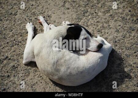 dog, lying in the sunMindelo, Cape Verde - Stock Photo
