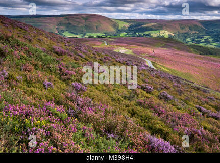 Llantysilio Mountain looking to Moel Fferna in summer, near Llangollen, Denbighshire, North Wales, UK - Stock Photo