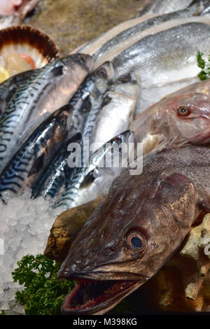 mackerel hake and scallops on a wet fresh fish fishmongers stall on at borough market in southwark central london. - Stock Photo