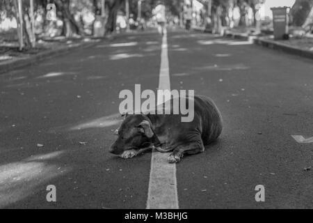 a dog sleeping in a park in Bangkok, Thailand - Stock Photo