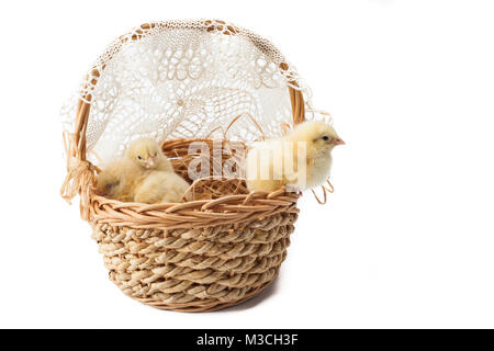 yellow, tiny fluffy chickens in the Easter basket on a white background - Stock Photo