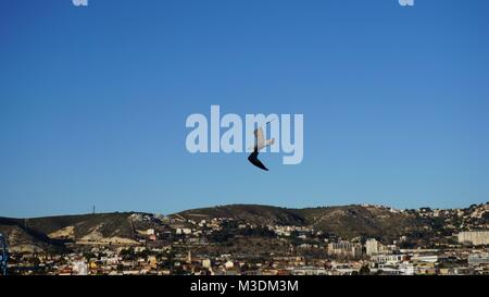 Cruising in the Mediterranean Sea - Marseille, South of France,  on a cruising ship in winter - sea gull - Stock Photo