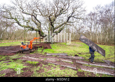 Ground work too protect the ancient Major Oak tree in Sherwood forest. - Stock Photo