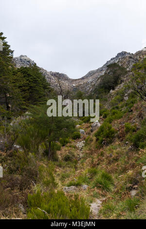 Trees in the foreground and mountains in the background (Peneda-Gerês National Park) - Stock Photo