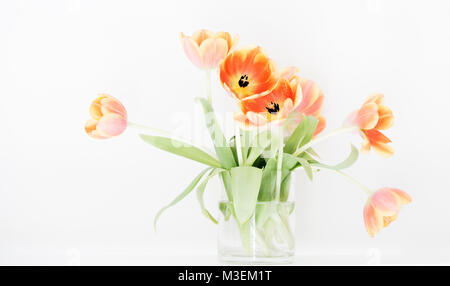 A glass vase of vibrant, orange tulips set against a bright white background. - Stock Photo