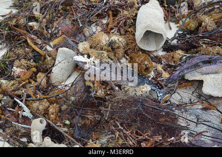 Garbage, plastic waste and heaps of dead marine plants and animals washed out on a beach in Cayo Coco Cuba after - Stock Photo