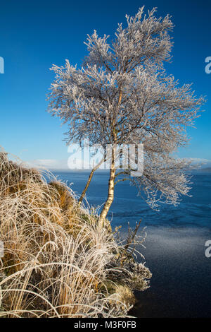 A tree covered in Hoar frost on the edge of Loch na h'Achlaise, Rannoch Moor, Scotland. The grass and all the undergrowth - Stock Photo