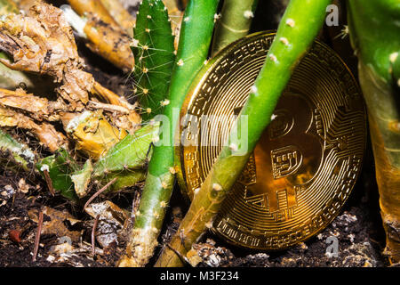 Crypto currency. Bitcoin. A crisis. The find. Treasure. The gold coin deprecated and was thrown to the ground. Lies - Stock Photo