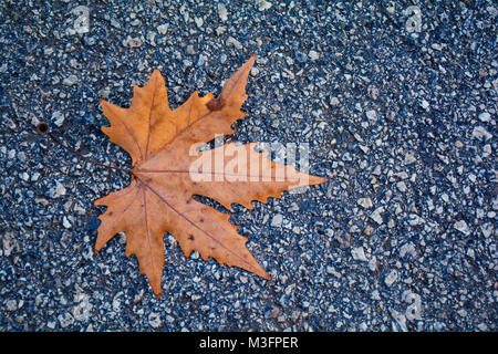 red autumn dry fall nature color leaf on concrete asphalt background - Stock Photo
