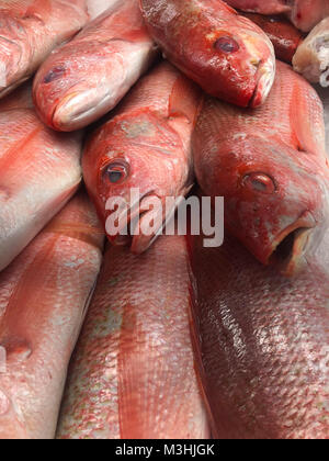 Fresh red fish on ice at a local market - Stock Photo