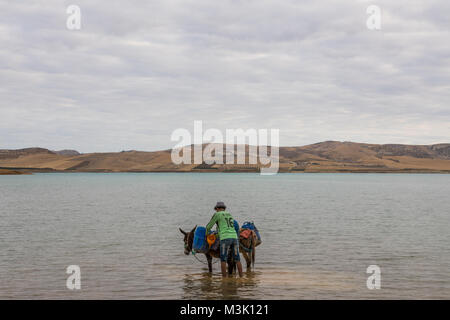 Donkey collecting water from the lake cloudy day - Stock Photo