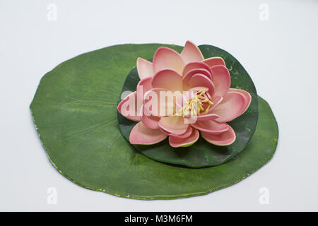 A beautiful pink and yellow waterlily or lotus flower with green leaves on white background - Stock Photo