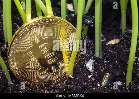 Crypto currency. Bitcoin. A crisis. The find. Treasure. The gold coin depreciated and was thrown to the ground like - Stock Photo
