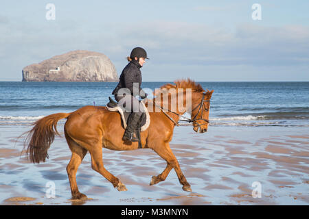 A beautiful, sunny, early morning horse ride on Seacliffe Beach, East Lothian, Scotland with the Bass Rock in the - Stock Photo