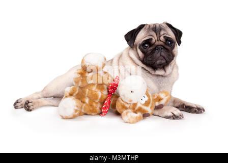 sweet pug puppy dog lying down like a model, with stuffed animal giraffe, on white background - Stock Photo