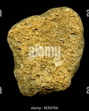Detail of marine bryozoan fossils containing multiple specimens - Stock Photo