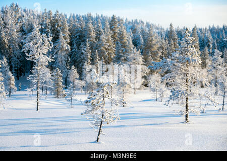 Snow-laden forests of northern Finland