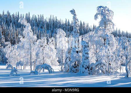 Snow-laden forests of northern Finland - Stock Photo