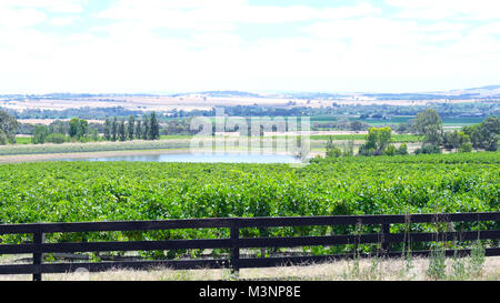 Rows of grapevines and surrounding valley from Lily Farm Road in the Barossa Valley, South Australia. - Stock Photo