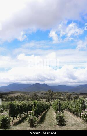 Vineyards and Wine tasting in Yarra Valley region - Stock Photo
