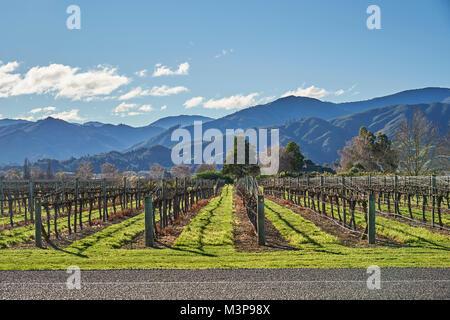 A vineyard below Wither Hills near Blenheim, South Island, New Zealand - Stock Photo